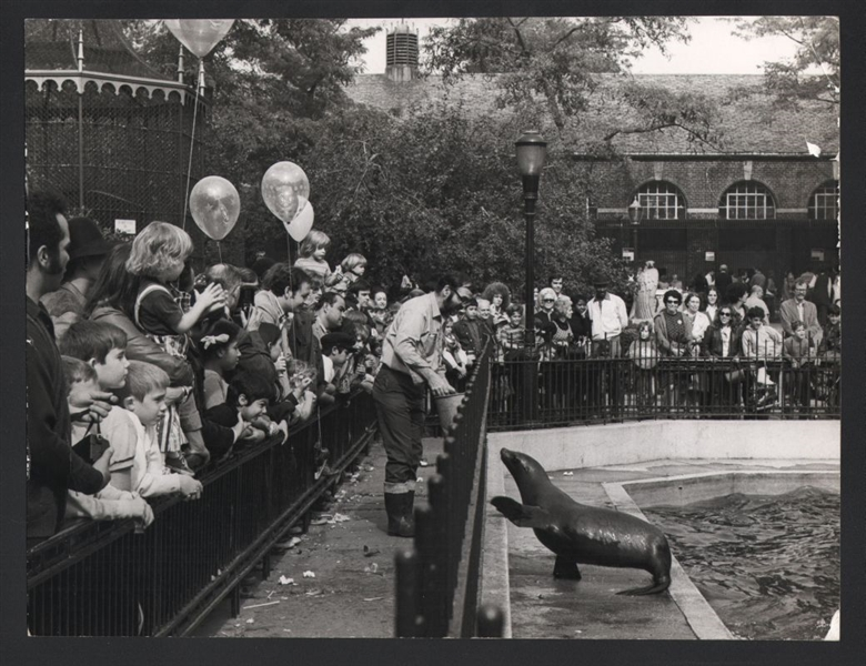 1960s CENTRAL PARK ZOO SEAL SHOW Oversized Vintage Original Photo gp